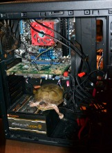 there's a turtle in that there computer ;)