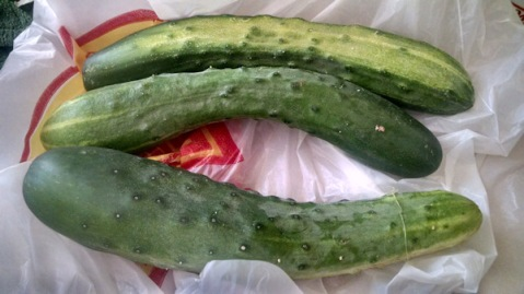 Cucumbers from heaven?