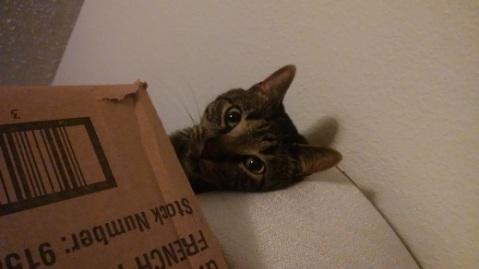 """Hideki says """"Hello!"""""""