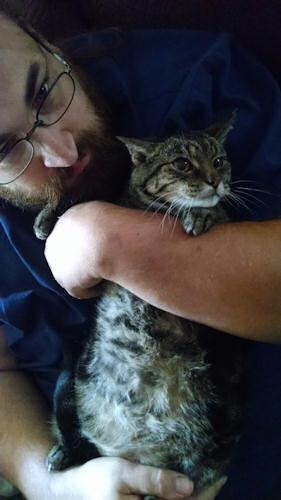 Fat kitty tummy