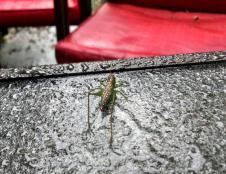 Wednesday: Rain on the grasshopper – he was hanging out under the umbrella with us trying to tstay dry, but patio umbrellas only last so long before the water leaks through