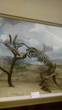 Giant Sloth - my brother's ancestor (yet not related to me LOL!)