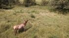 Elk says hello