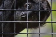 monkey says hello